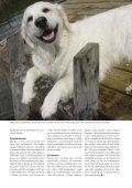 Renen - Djurskyddet Sverige - Page 7