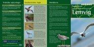 fugle der holder til på denne egn - Naturrum Thyborøn