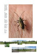 10 juni 2012 Grootse Scheppingen - Page 4