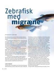 Små fisk hjælper lige nu et hold forskere på Aarhus Universitet til at ...