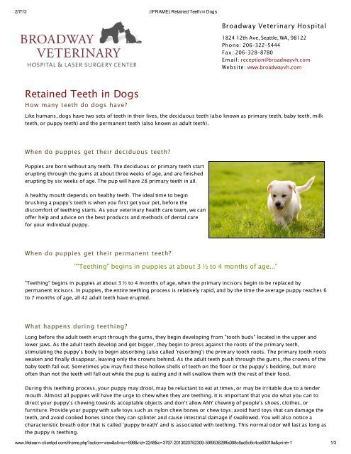 Retained Teeth In Dogs Broadway Veterinary Hospital