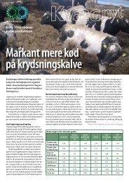 Kvæg Nyt nr. 23 - 2011 - Videncentret for Landbrug