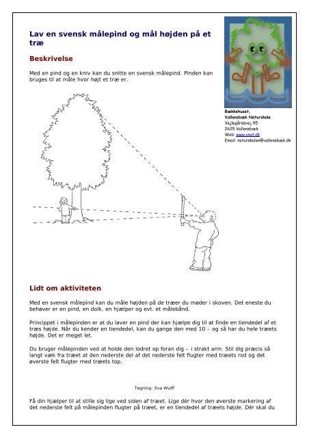 05cdf60b Lav en svensk målepind og mål højden på et træ - Bækkehuset