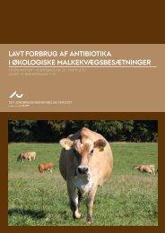 Lavt forbrug af antibiotika i økoLogiske maLkekvægsbesætninger