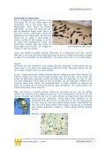 ZEEHONDEN(JACHT) - Kennisnet - Page 7