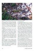 Het verzorgen en observeren van de Parelhagedis, Tirnon ... - Lacerta - Page 4