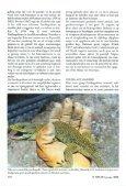 Het verzorgen en observeren van de Parelhagedis, Tirnon ... - Lacerta - Page 6