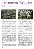 Nr. 1 - Den norske Rhododendronforening - Page 4