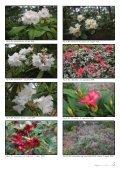 Nr. 1 - Den norske Rhododendronforening - Page 5