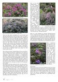 Nr. 1 - Den norske Rhododendronforening - Page 6