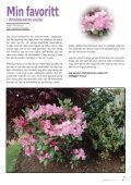 Nr. 1 - Den norske Rhododendronforening - Page 7