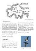 Skådarguide till Varbergs fågellokaler (10 MB) - Page 7