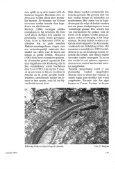 Ervaringen met de Madeira-muurhagedis (Podarcis dugesii) - Lacerta - Page 3