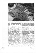Ervaringen met de Madeira-muurhagedis (Podarcis dugesii) - Lacerta - Page 4