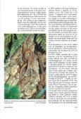 Ervaringen met de Madeira-muurhagedis (Podarcis dugesii) - Lacerta - Page 7