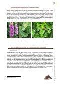 Giftige planten, struiken en bomen - Dossier Hilde Nelis - Vlaams ... - Page 2