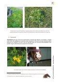 Giftige planten, struiken en bomen - Dossier Hilde Nelis - Vlaams ... - Page 3