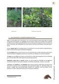Giftige planten, struiken en bomen - Dossier Hilde Nelis - Vlaams ... - Page 6