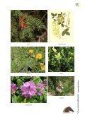 Giftige planten, struiken en bomen - Dossier Hilde Nelis - Vlaams ... - Page 7