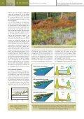 Artikel Lippenbroek Natuur.focus - Page 3