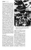 NORBERT DE BATSEtiER - Nieuw in de Zoogdierwinkel - Page 7
