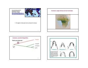 1. El registro molecular de la evolución humana. Contexto ... - EVA