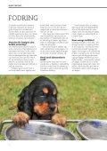 HUNDEHVALPENS SUNDHED - Dyrefondet - Page 6