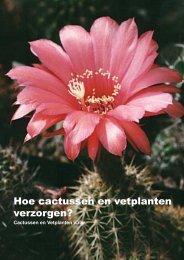 verzorgen - Cactussen & Vetplanten vzw