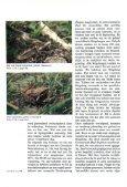 Wenen, een paradijs voor liefhebbers van reptielen en ... - Lacerta - Page 3