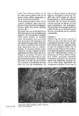 Wenen, een paradijs voor liefhebbers van reptielen en ... - Lacerta - Page 4