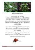 Bonatea speciosa (L.f) Willd. - Page 2