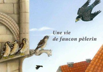 de faucon pèlerin - Faucons pour tous