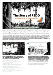The story of REDD: A real solution to deforestation? - Fern