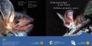 Fledermausschutz in der Praxis - Fledermaus-Bayern