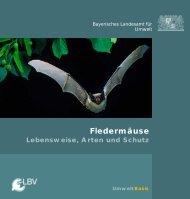 Fledermäuse - Lebensweise, Arten und Schutz - Fledermaus-Bayern