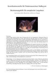 Bestimmungshilfe für europäische Langohren - Fledermaus-Bayern