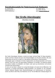 Der Große Abendsegler - Fledermaus-Bayern