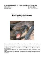 Die Zweifarbfledermaus - Fledermaus-Bayern