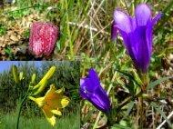 Naturschutz im Burgenland