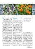 Wohngarten in Silber und Orange - die Bäumler - Seite 2