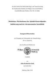 Molekulare Mechanismen der Spindel-Kontrollpunkt - Philipps ...