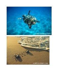 Die Meeresschildkröte und der Mensch - WWF Schweiz