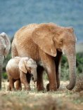 Mach dich stark gegen den Wildtierhandel - Page 5