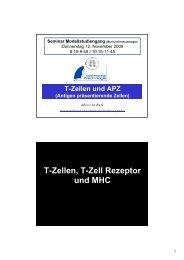 T-Zellen, T-Zell Rezeptor und MHC