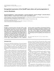 Deregulated expression of the RanBP1 gene alters cell cycle ...