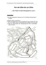 Von der Eibe bis zur Zirbe - Deutsches Jugendherbergswerk