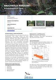 Bruchwald Rosdunk - NABU-Stiftung Nationales Naturerbe
