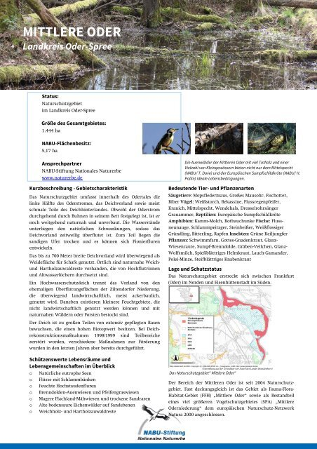 MITTLERE ODER - NABU-Stiftung Nationales Naturerbe