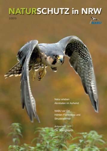 Erfolgreicher Wanderfalkenschutz / In aller Munde - NABU NRW