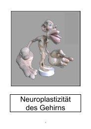 Neuroplastizität des Gehirns - Formatio